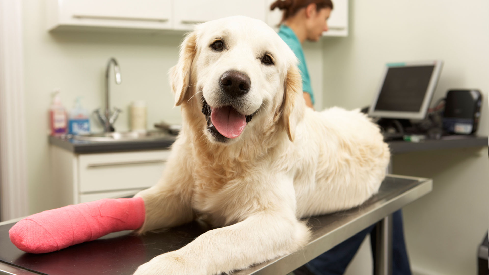 Is Pet Insurance Really Necessary?